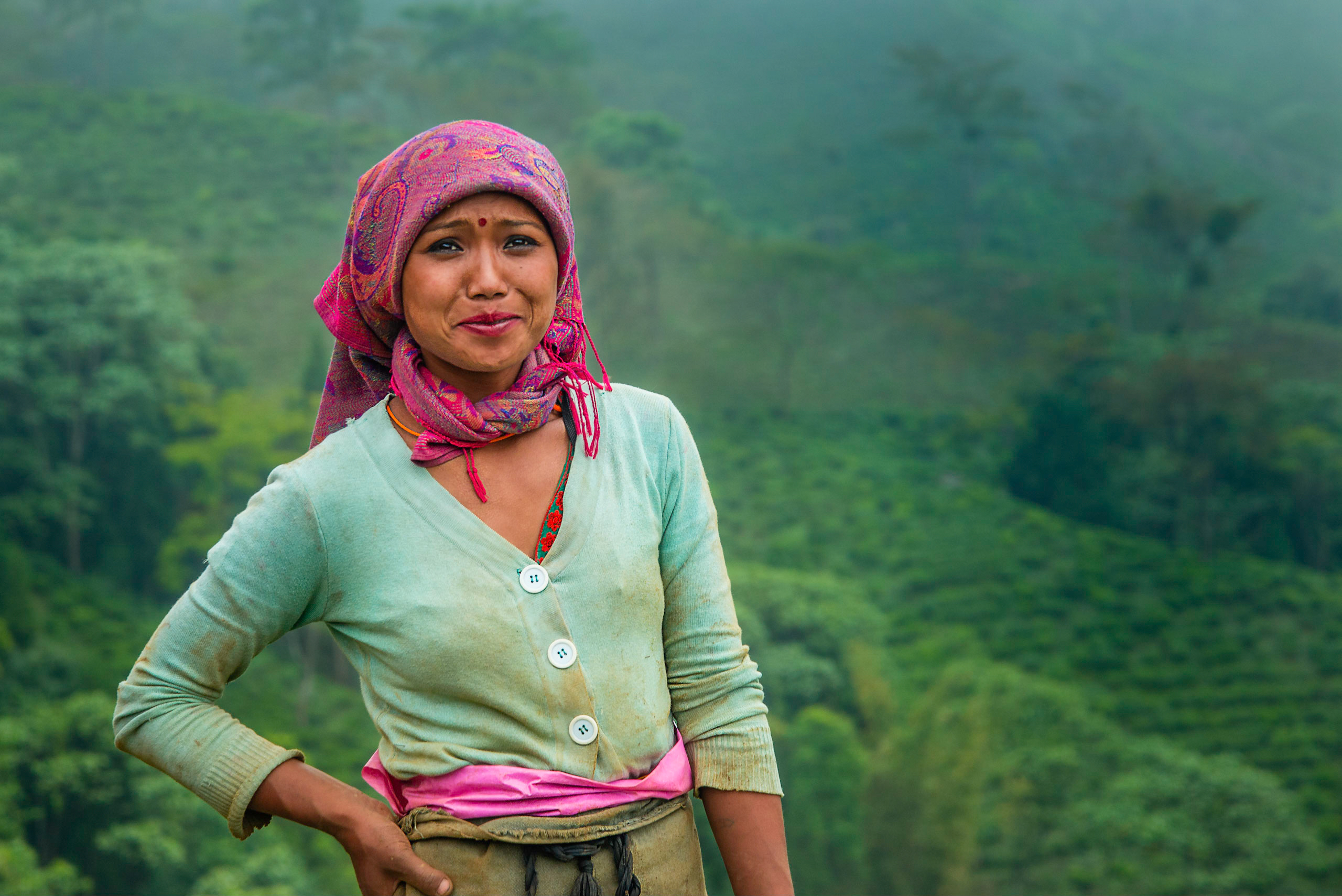 Plantation de thé de Darjeeling, Nord-Est de l'Inde